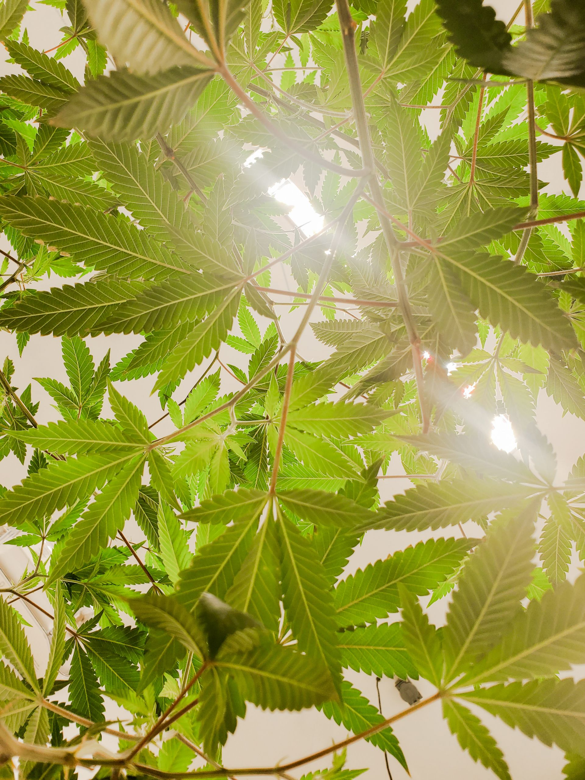 CBD Oil For Cancer Patients, CBD Oil For Cancer Patients, Cannabella